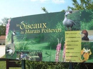 Oiseaux du Marais Poitevin