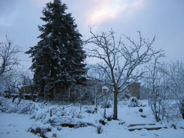 Snow - Garden