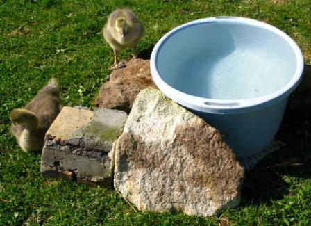 Water Bath